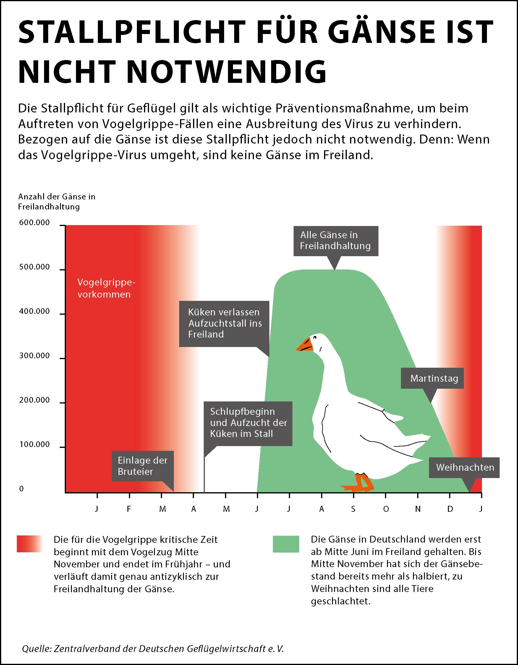 Kuş Gribine Ne İyi Gelir: Kuş Gribi İçin Bitkisel Çözüm
